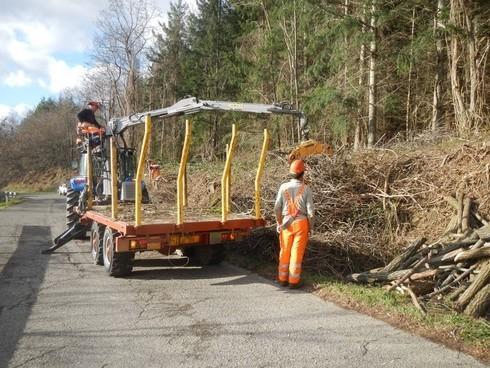 taglio alberi lungo la strada provinciale